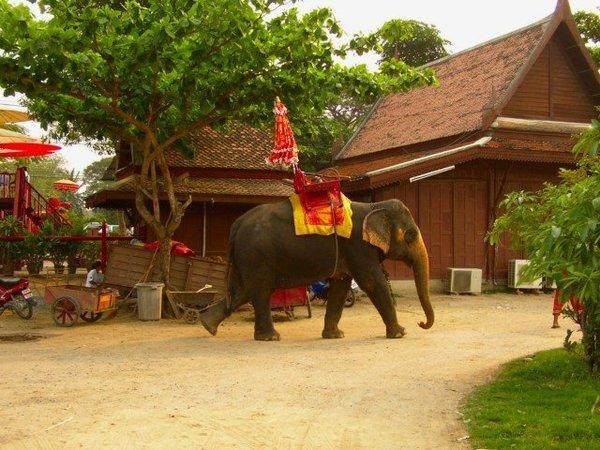 thai-elephant.jpg